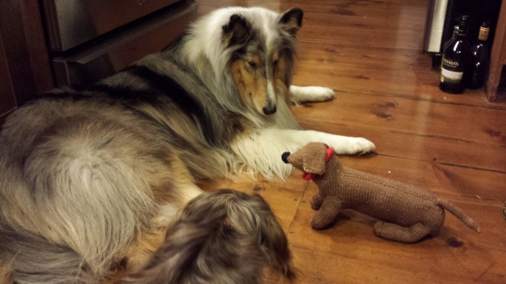 And here's me - hanging out with my pack. That's Toby the collie - he's a really nice dog!