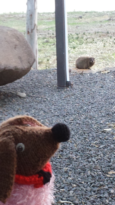 Me and my new friend, Hyrax