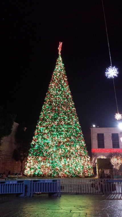 Tree in Manger Square