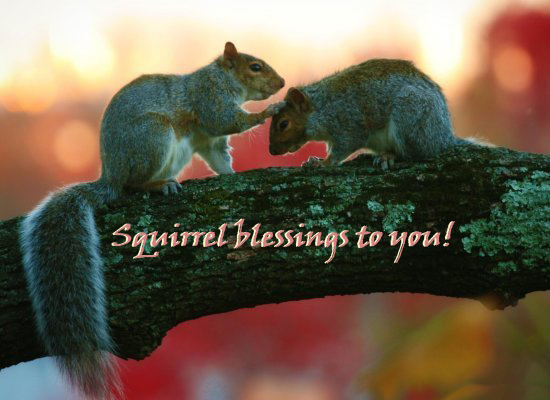 squirrel blessing to you